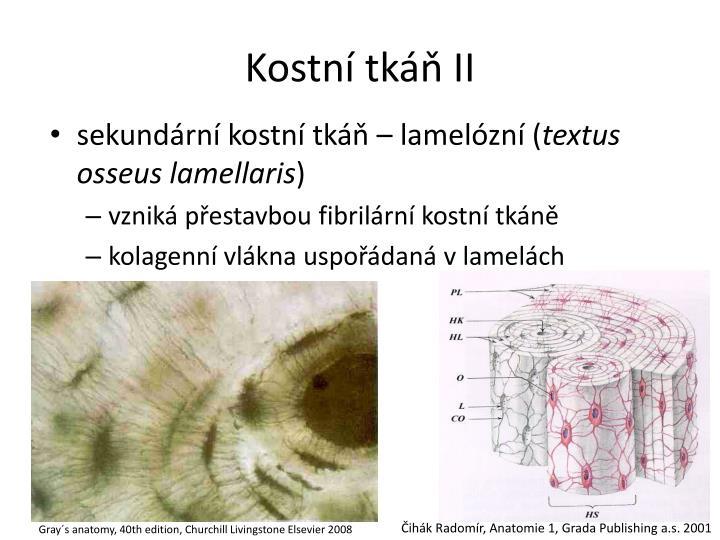 Kostní tkáň II