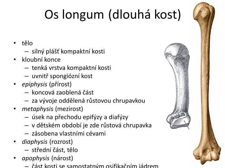 Os longum
