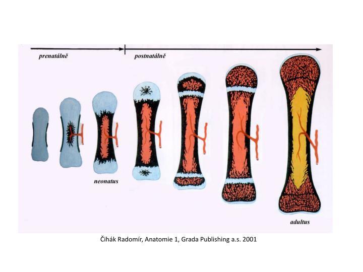Čihák Radomír, Anatomie 1, Grada Publishing a.s. 2001