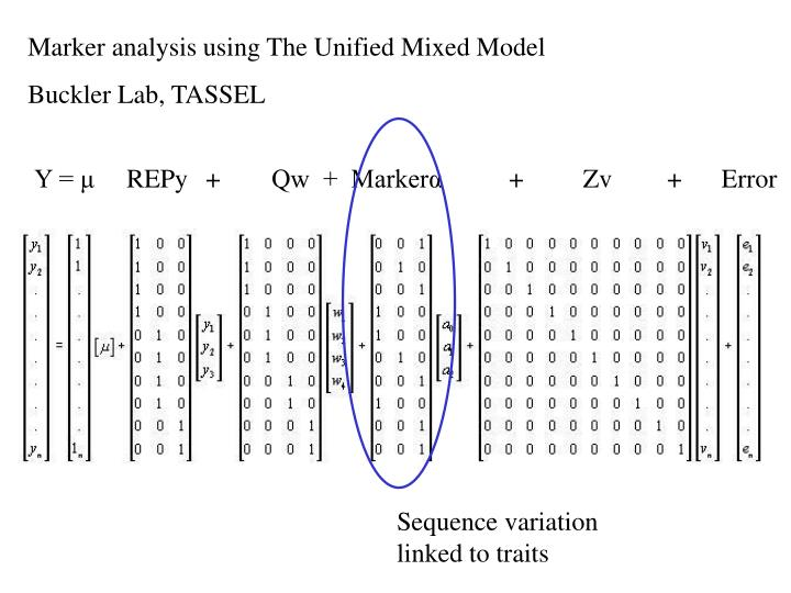 Marker analysis using The Unified Mixed Model