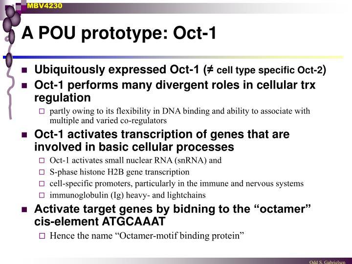 A POU prototype: Oct-1