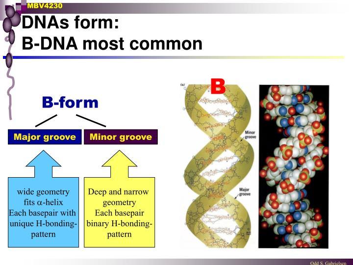 DNAs form: