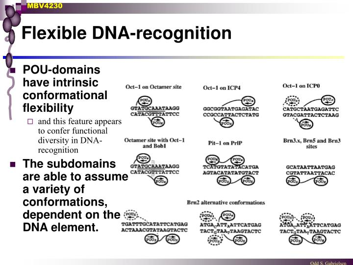 Flexible DNA-recognition