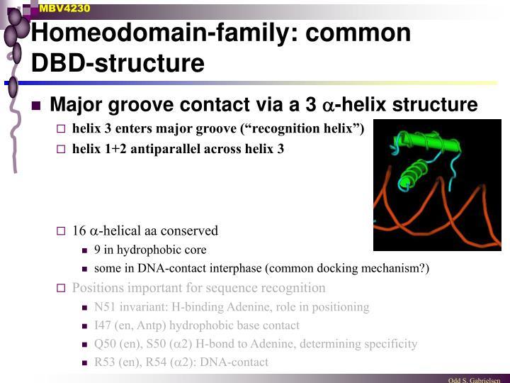 Homeodomain-family: common DBD-structure