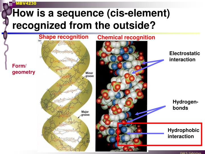 How is a sequence (cis-element) recognized from the outside?