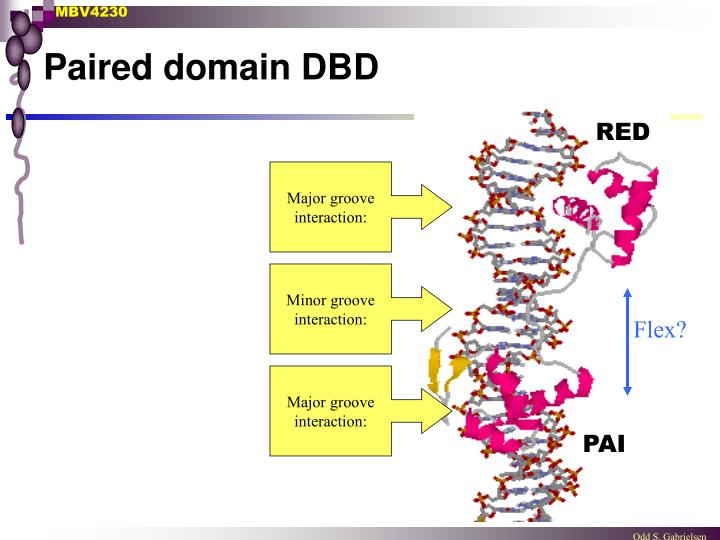 Paired domain DBD