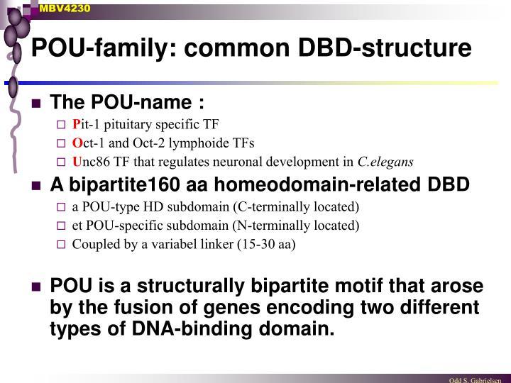 POU-family: common DBD-structure