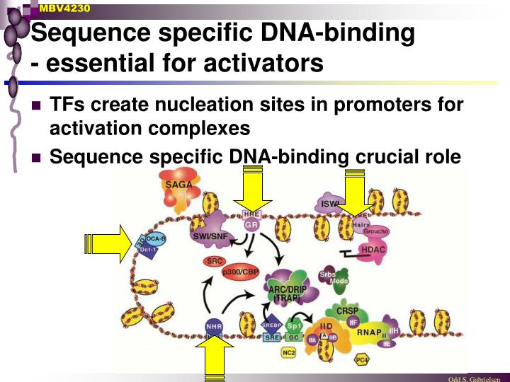 Sequence specific DNA-binding