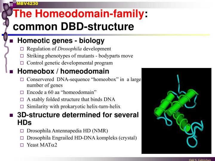 The Homeodomain-family