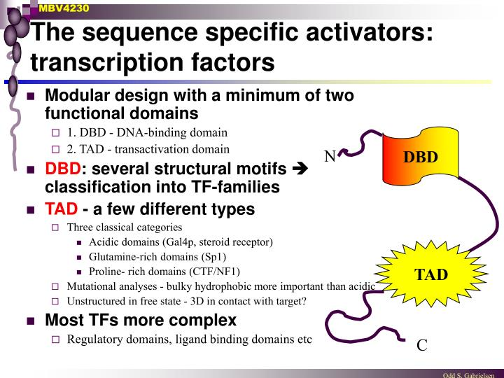 The sequence specific activators: