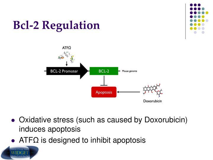 Bcl-2 Regulation