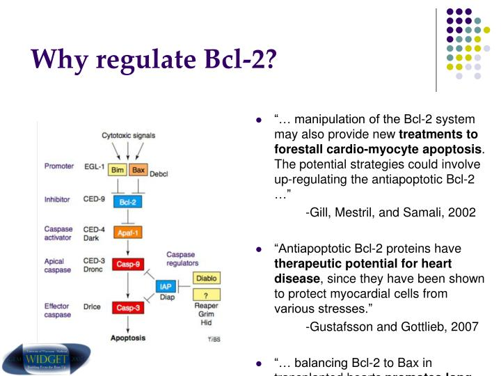 Why regulate Bcl-2?