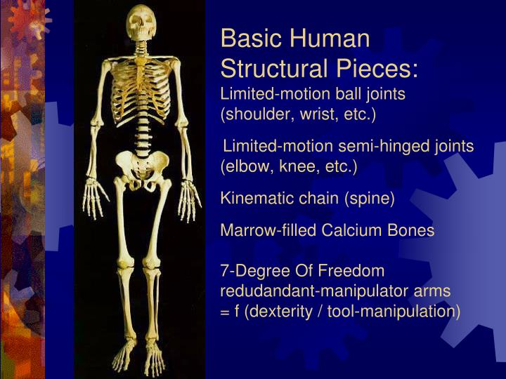 Basic Human Structural Pieces: