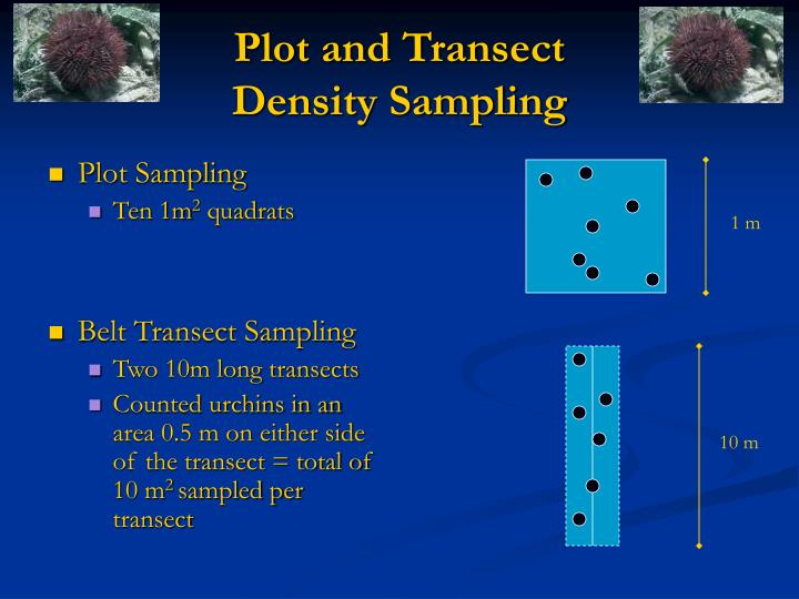 Plot and Transect
