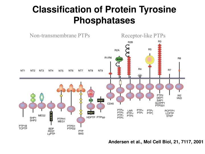 Classification of Protein Tyrosine Phosphatases