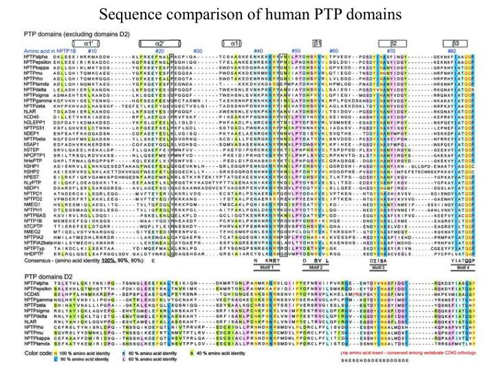 Sequence comparison of human PTP domains
