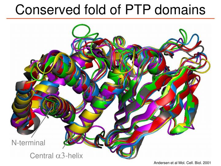 Conserved fold of PTP domains