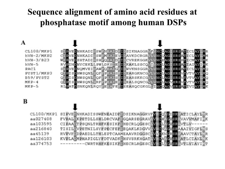 Sequence alignment of amino acid residues at
