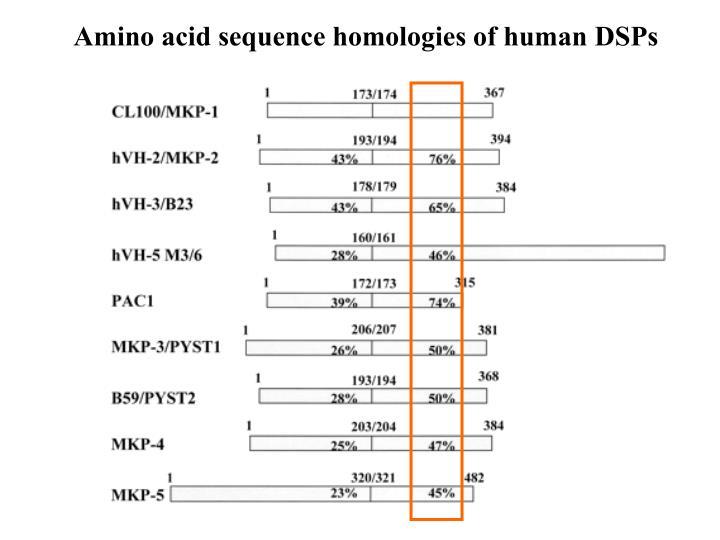 Amino acid sequence homologies of human DSPs