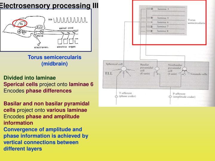 Electrosensory processing III: