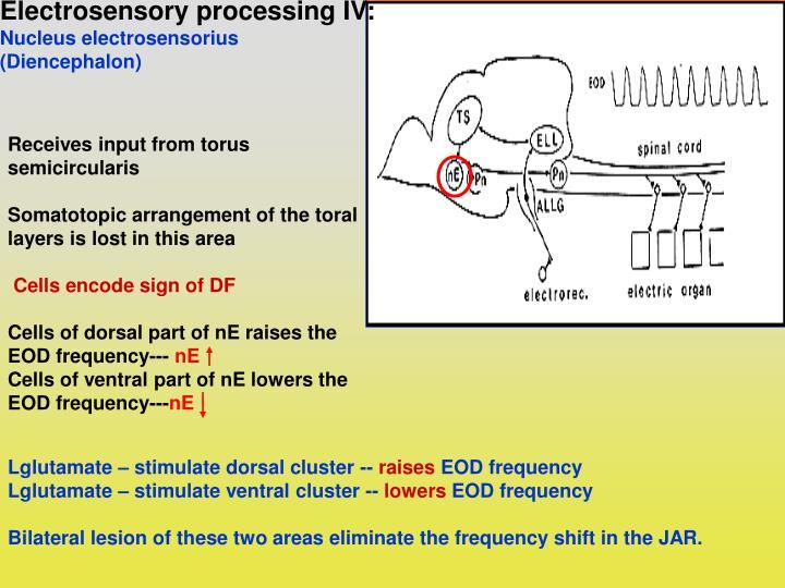 Electrosensory processing IV: