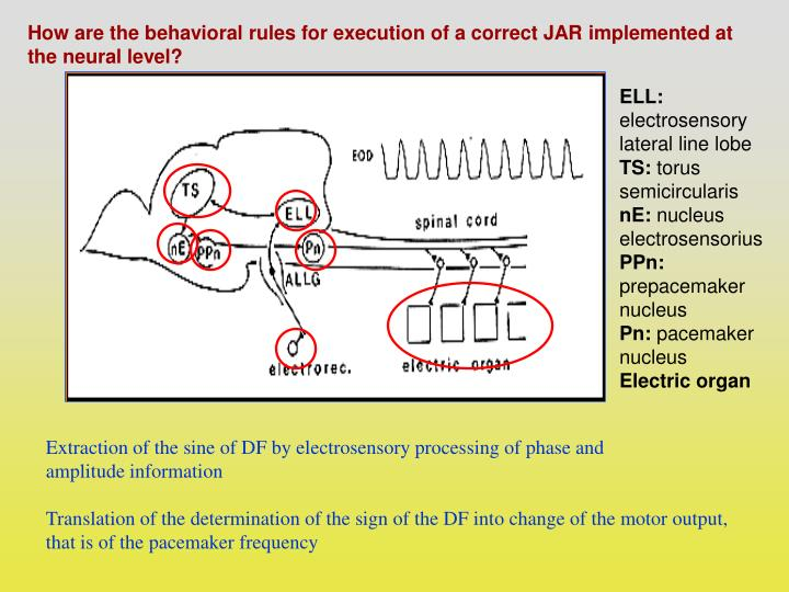 How are the behavioral rules for execution of a correct JAR implemented at the neural level?