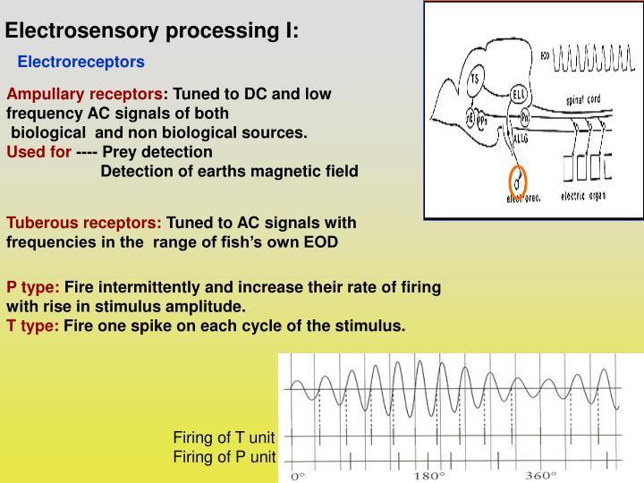 Electrosensory processing I:
