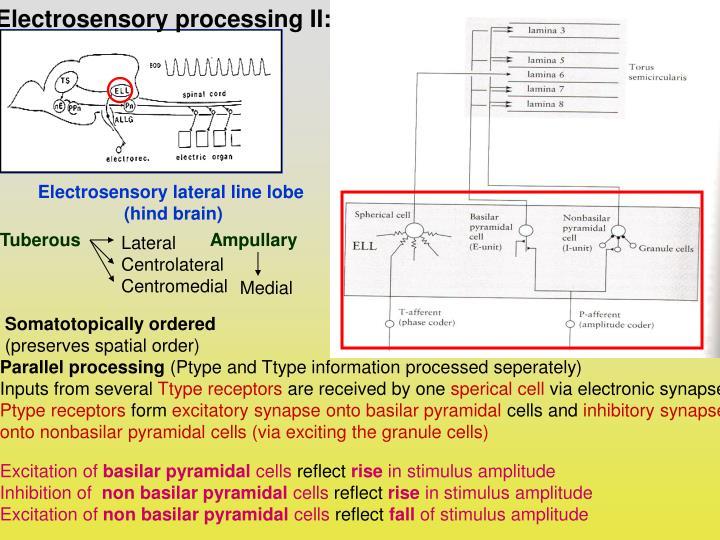 Electrosensory processing II: