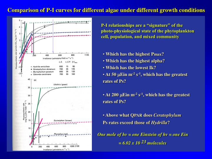 Comparison of P-I curves for different algae under different growth conditions