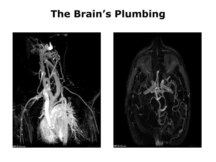 The Brain's Plumbing