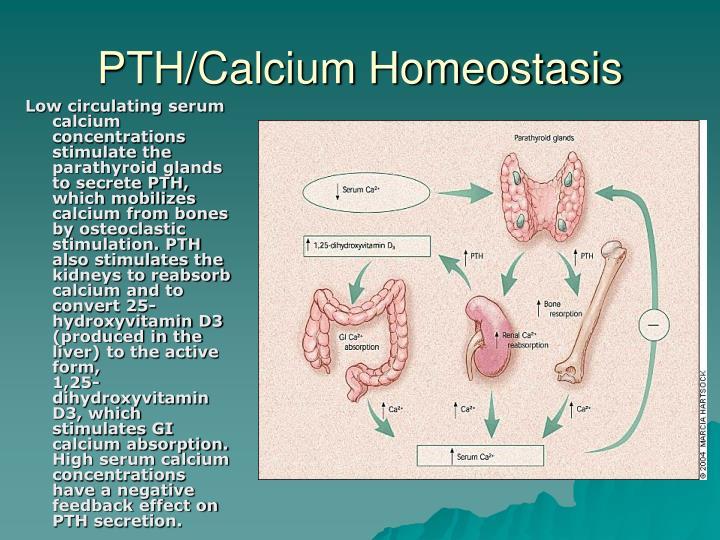 PTH/Calcium Homeostasis