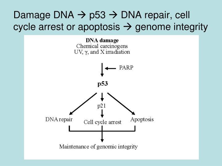 Damage DNA