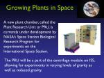 growing plants in space1