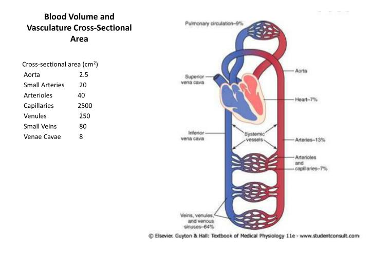 Blood Volume and Vasculature Cross-Sectional Area