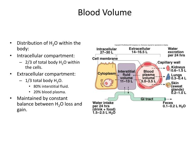 Blood Volume