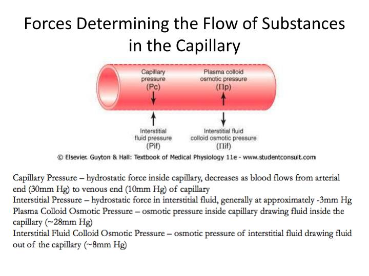 Forces Determining the Flow of Substances in the Capillary