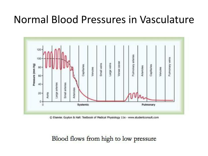 Normal Blood Pressures in Vasculature