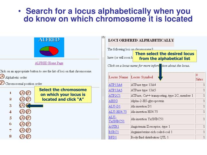 Search for a locus alphabetically when you do know on which chromosome it is located