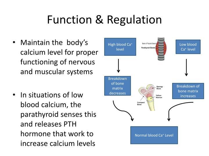 Function & Regulation
