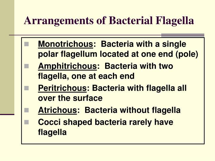 Arrangements of Bacterial Flagella