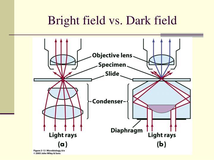 Bright field vs. Dark field