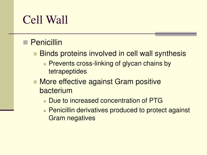 Cell Wall