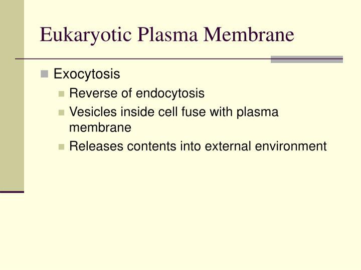 Eukaryotic Plasma Membrane