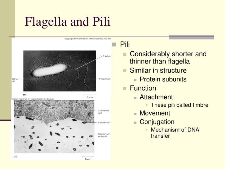 Flagella and Pili