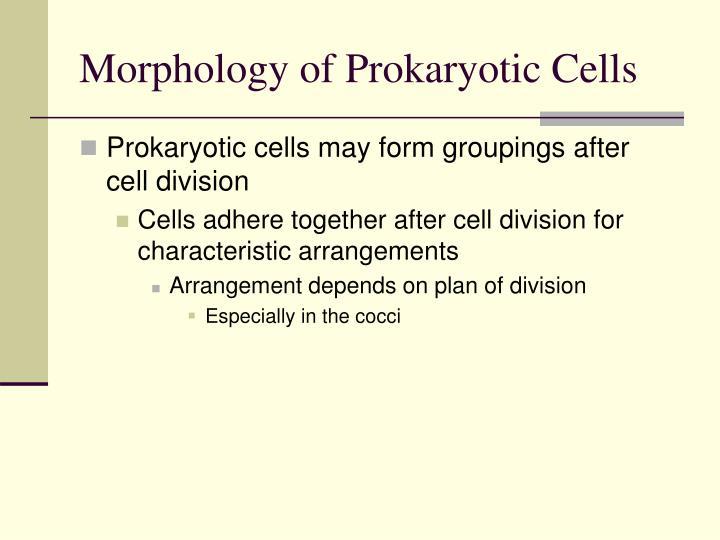 Morphology of Prokaryotic Cells