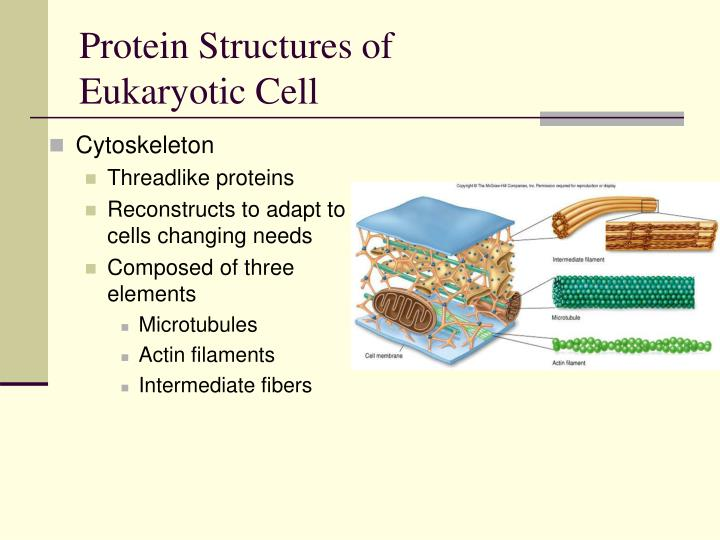 Protein Structures of