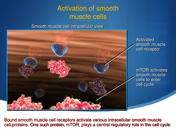 Activation of smooth
