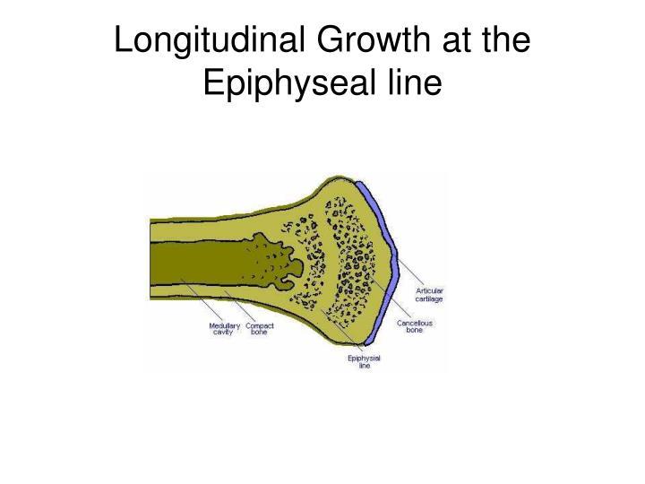 Longitudinal Growth at the Epiphyseal line