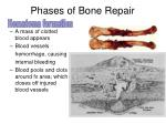 phases of bone repair