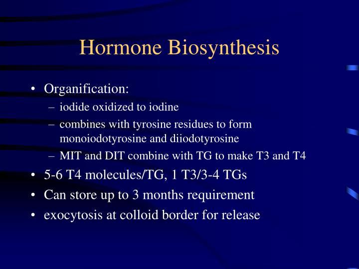 Hormone Biosynthesis